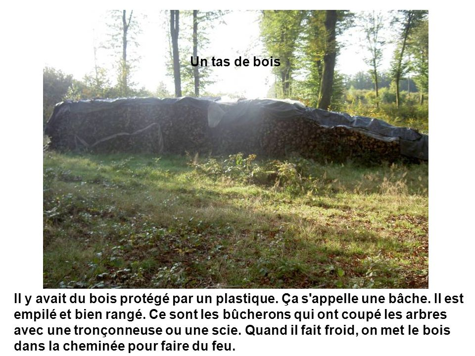 Un tas de bois Il y avait du bois protégé par un plastique. Ça s'appelle une bâche. Il est empilé et bien rangé. Ce sont les bûcherons qui ont coupé l