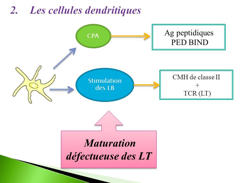 CPA Ag peptidiques PED BIND Stimulation des LB CMH de classe II + TCR (LT) Maturation défectueuse des LT