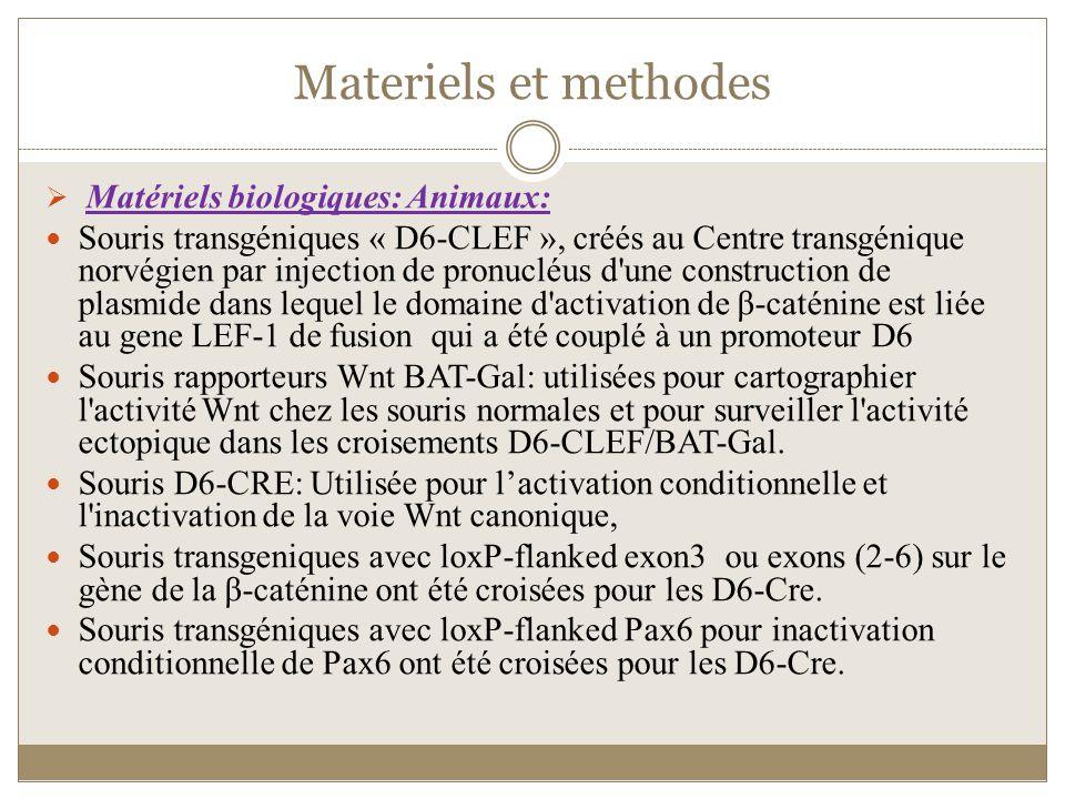 Materiels et methodes Matériels biologiques: Animaux: Souris transgéniques « D6-CLEF », créés au Centre transgénique norvégien par injection de pronuc