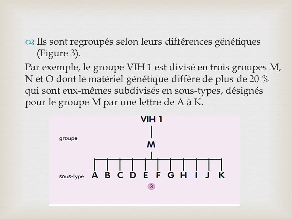Ils sont regroupés selon leurs différences génétiques (Figure 3). Par exemple, le groupe VIH 1 est divisé en trois groupes M, N et O dont le matériel
