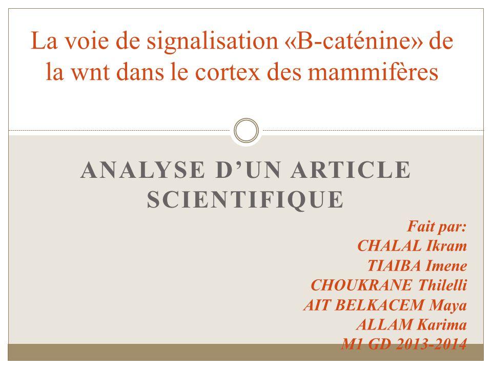 ANALYSE DUN ARTICLE SCIENTIFIQUE La voie de signalisation «B-caténine» de la wnt dans le cortex des mammifères Fait par: CHALAL Ikram TIAIBA Imene CHOUKRANE Thilelli AIT BELKACEM Maya ALLAM Karima M1 GD 2013-2014