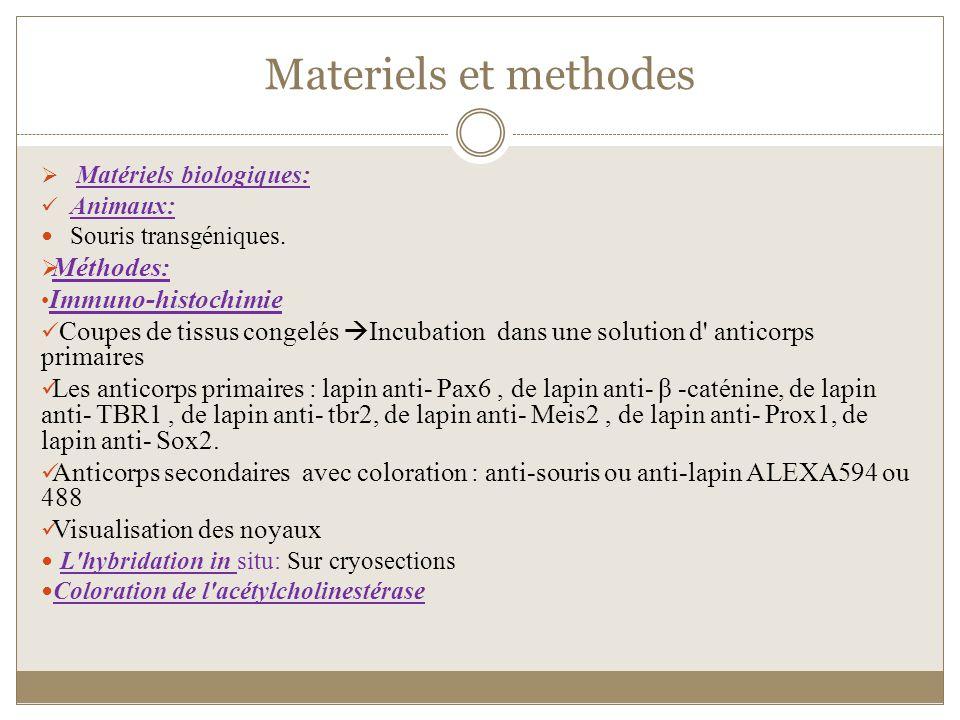 Materiels et methodes Matériels biologiques: Animaux: Souris transgéniques. Méthodes: Immuno-histochimie Coupes de tissus congelés Incubation dans une