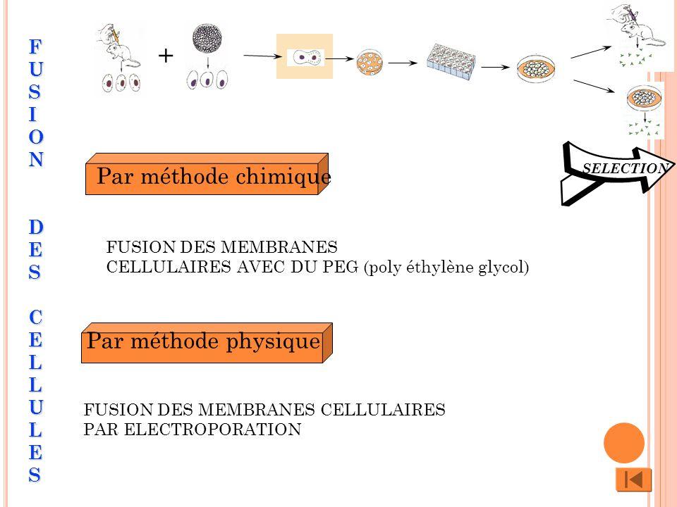 Par méthode chimique Par méthode physique SELECTION + FUSION DES MEMBRANES CELLULAIRES AVEC DU PEG (poly éthylène glycol) FUSION DES MEMBRANES CELLULAIRES PAR ELECTROPORATION FUSION DES CELLULESFUSION DES CELLULESFUSION DES CELLULESFUSION DES CELLULES