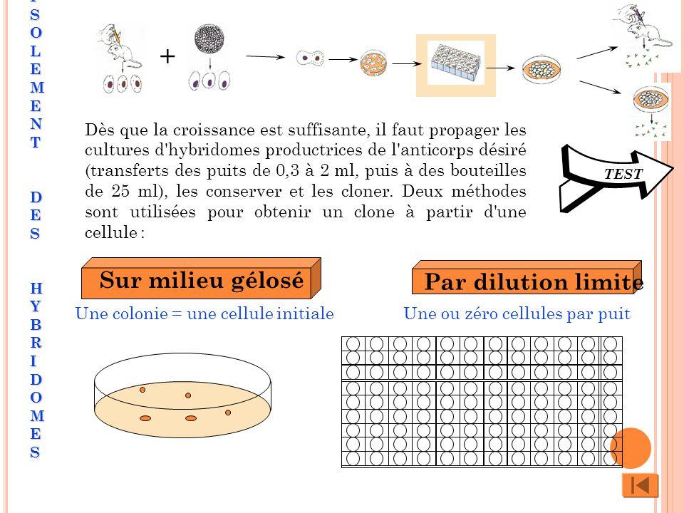 Sur milieu gélosé Par dilution limite Une colonie = une cellule initialeUne ou zéro cellules par puit + TEST Dès que la croissance est suffisante, il