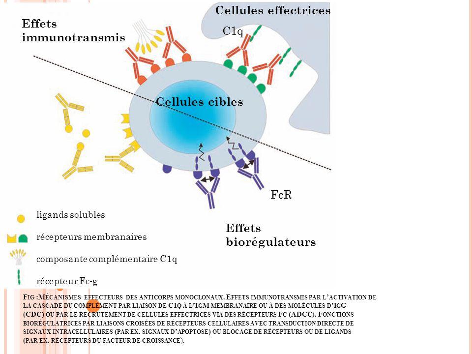 F IG :M ÉCANISMES EFFECTEURS DES ANTICORPS MONOCLONAUX. E FFETS IMMUNOTRANSMIS PAR L ACTIVATION DE LA CASCADE DU COMPLÉMENT PAR LIAISON DE C1 Q À L I