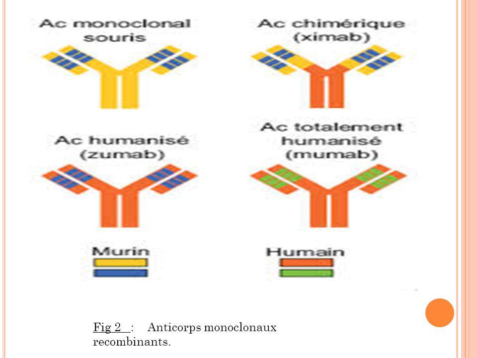 FUSION DES CELLULES SELECTION DES HYBRIDOME S HYBRIDOME S ISOLEMENT DES HYBRIDOMES TEST DES HYBRIDOME S HYBRIDOME S PRODUCTION DES HYBRIDOMES DÉROULEMENT DE LA PRODUCTION DES HYBRIDOMES OBTENTION DES CELLULES OBTENTION DES CELLULES