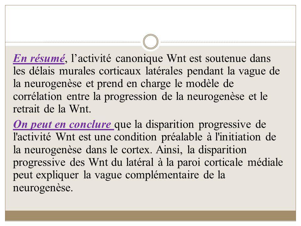 En résumé, lactivité canonique Wnt est soutenue dans les délais murales corticaux latérales pendant la vague de la neurogenèse et prend en charge le m