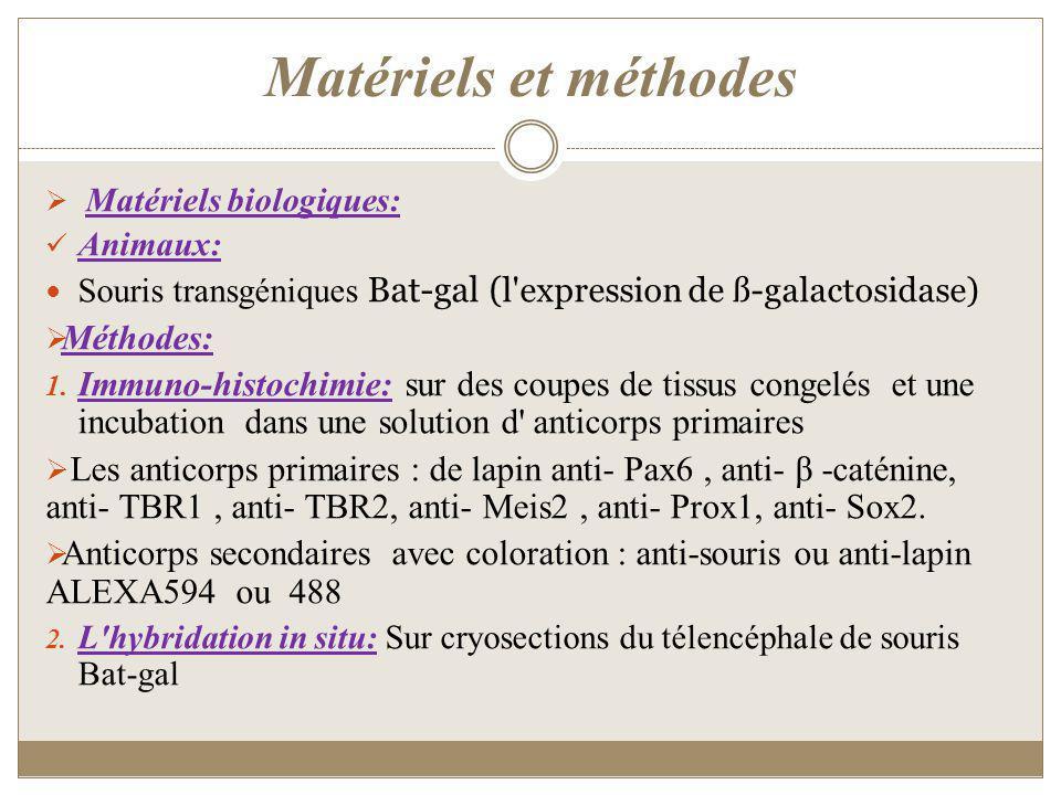 Matériels et méthodes Matériels biologiques: Animaux: Souris transgéniques Bat-gal ( l'expression de ß-galactosidase) Méthodes: 1. Immuno-histochimie: