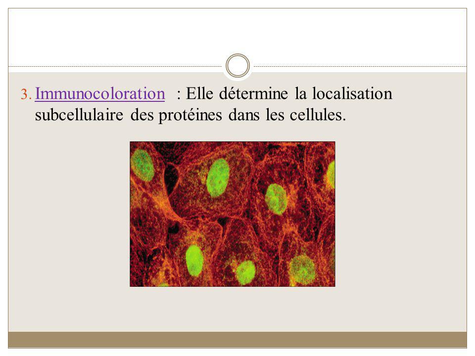 3. Immunocoloration : Elle détermine la localisation subcellulaire des protéines dans les cellules.