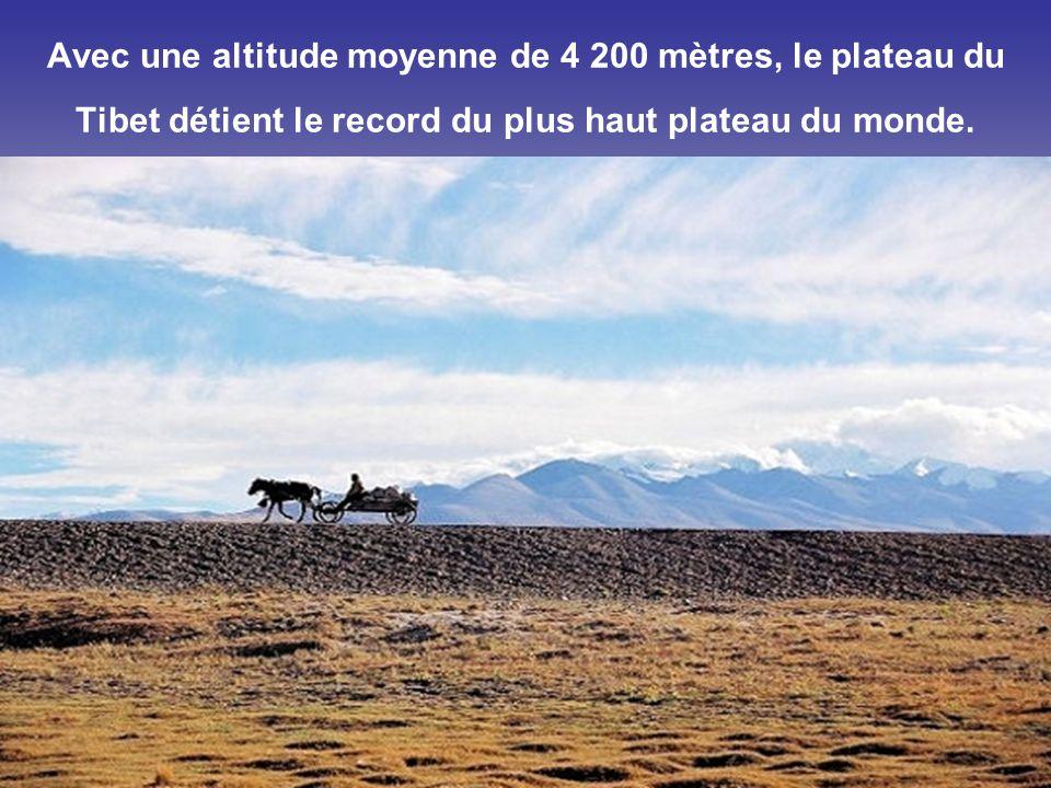 D'une superficie supérieure à 9 millions de km², le Sahara est le plus grand désert du monde. Il s'étend sur 10 pays : Algérie, Égypte, Libye, Mali, M
