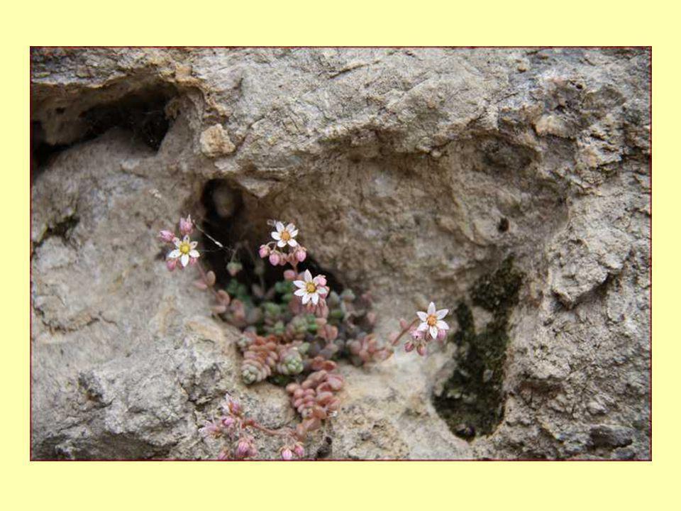 Des superbes entrées de maisonsFontaine creusée dans la roche.
