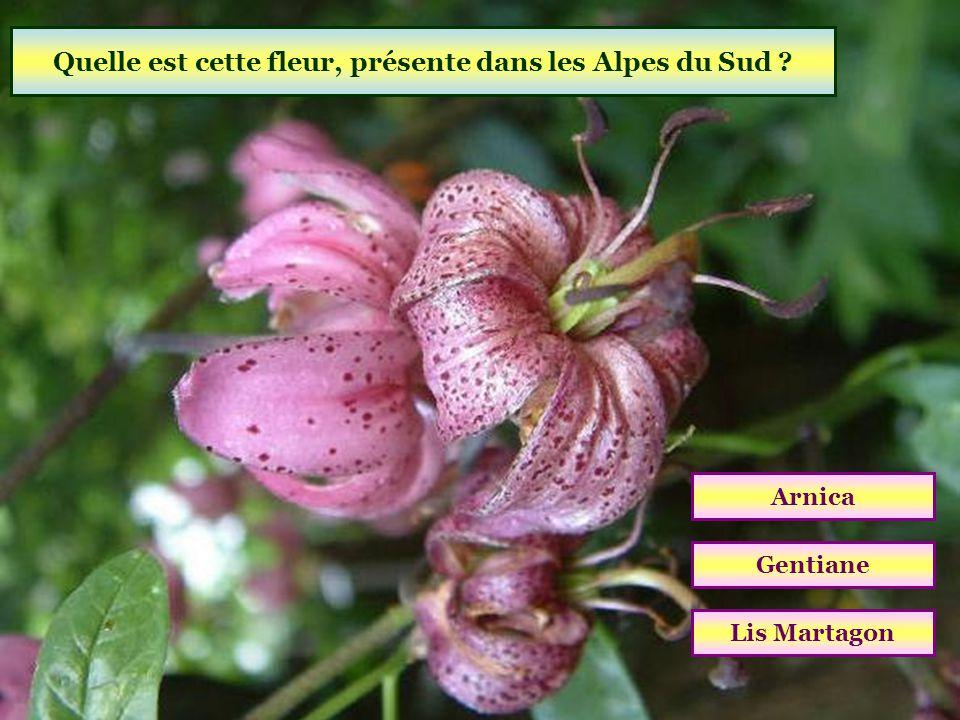 Quel parc national est situé sur les départements des Alpes-Maritimes et des Alpes-de-Haute-Provence ? Écrins Mercantour Vanoise