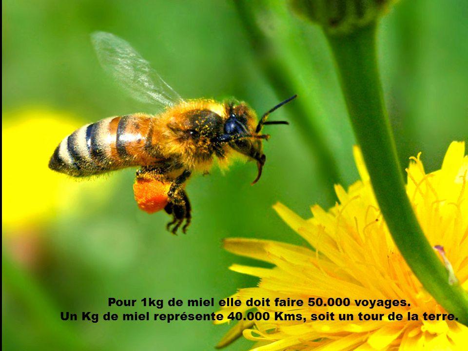 Les abeilles travaillent sans répit jour et nuit