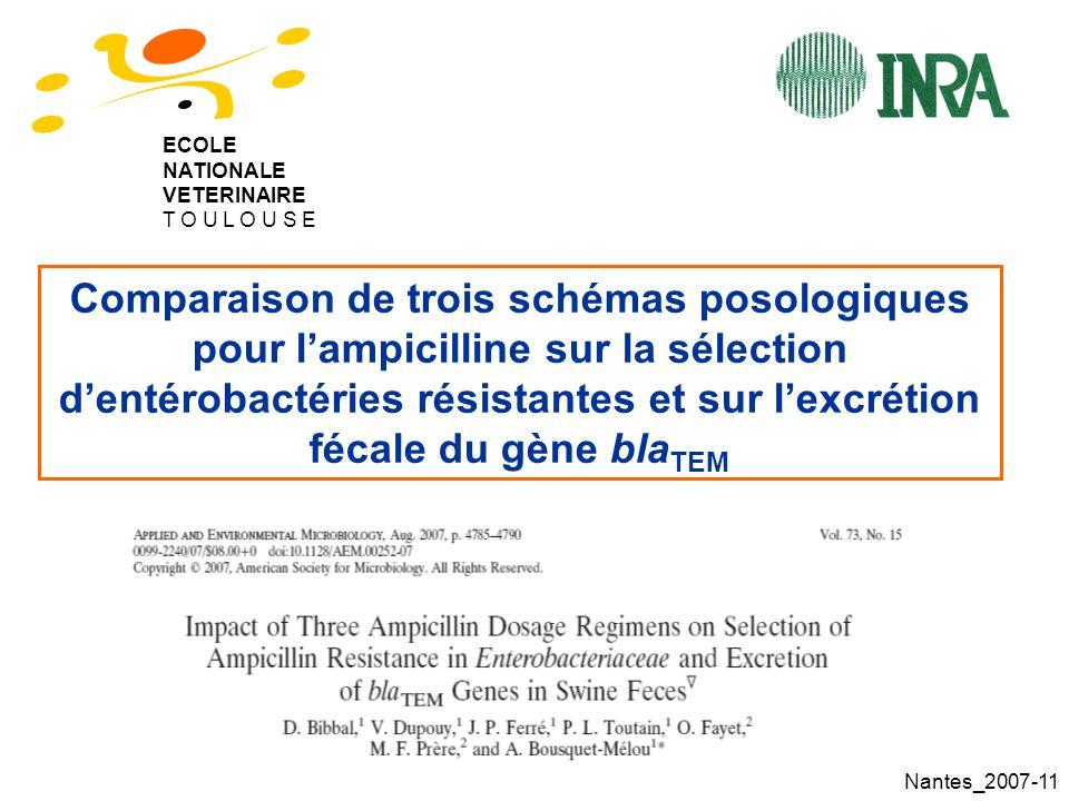 Nantes_2007-11 Comparaison de trois schémas posologiques pour lampicilline sur la sélection dentérobactéries résistantes et sur lexcrétion fécale du gène bla TEM ECOLE NATIONALE VETERINAIRE T O U L O U S E