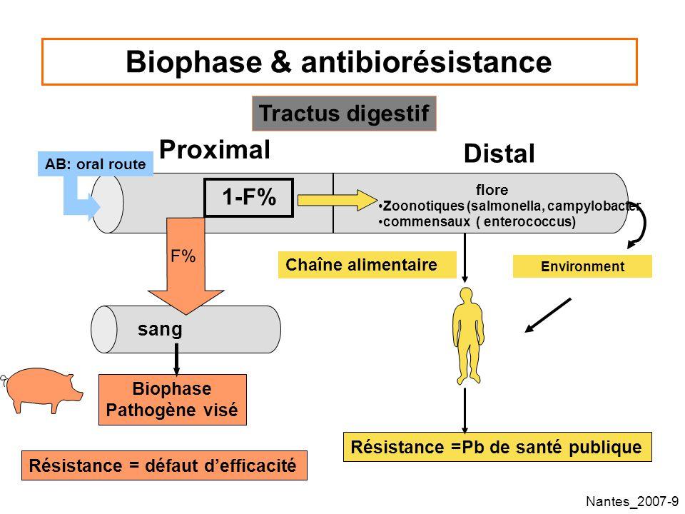Nantes_2007-60 Sélection par la pénicilline de bactéries résistantes dans une culture mixte de S.pneumoniae: témoin A Odenholt, 2003 Équilibre dynamique entre les population, les S contrôlant la taille des I et R