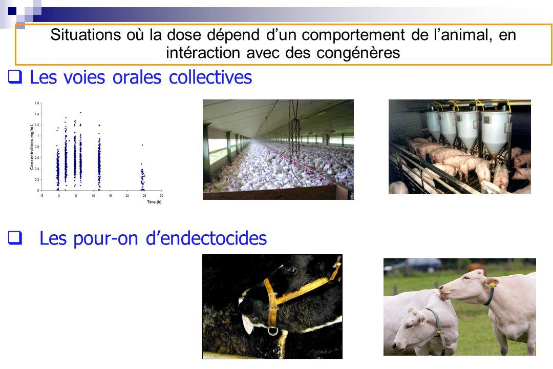 Les voies orales collectives Les pour-on dendectocides Situations où la dose dépend dun comportement de lanimal, en intéraction avec des congénères