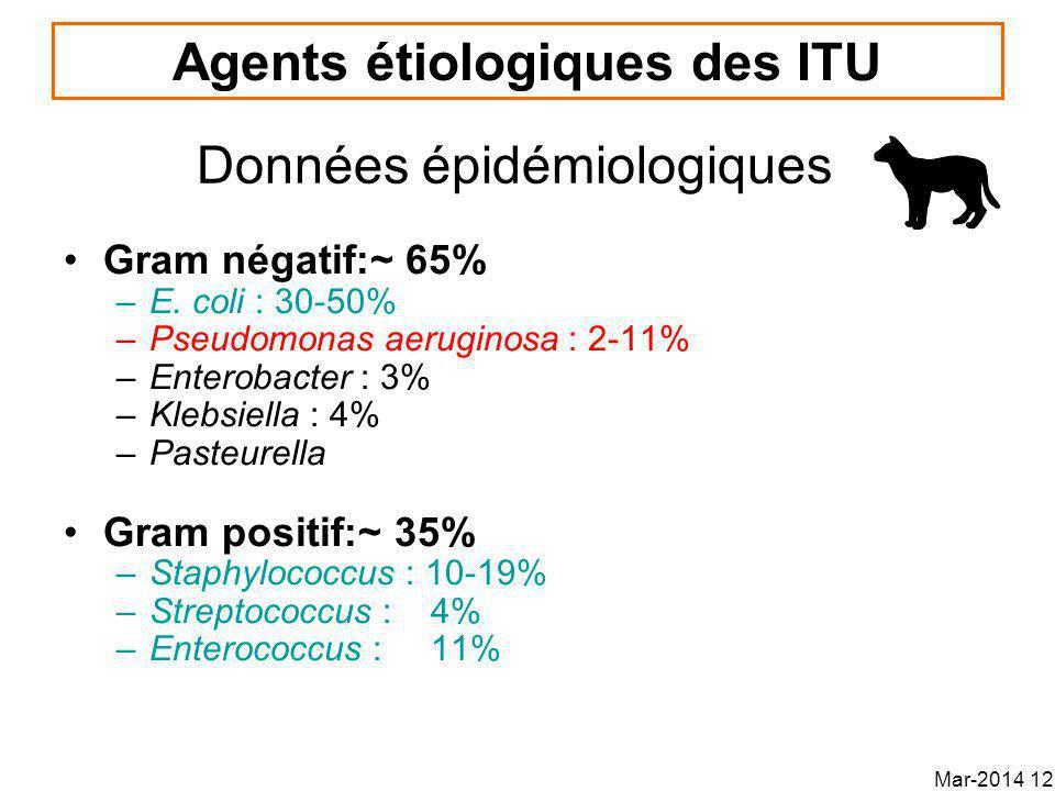 Agents étiologiques des ITU Gram négatif:~ 65% –E.