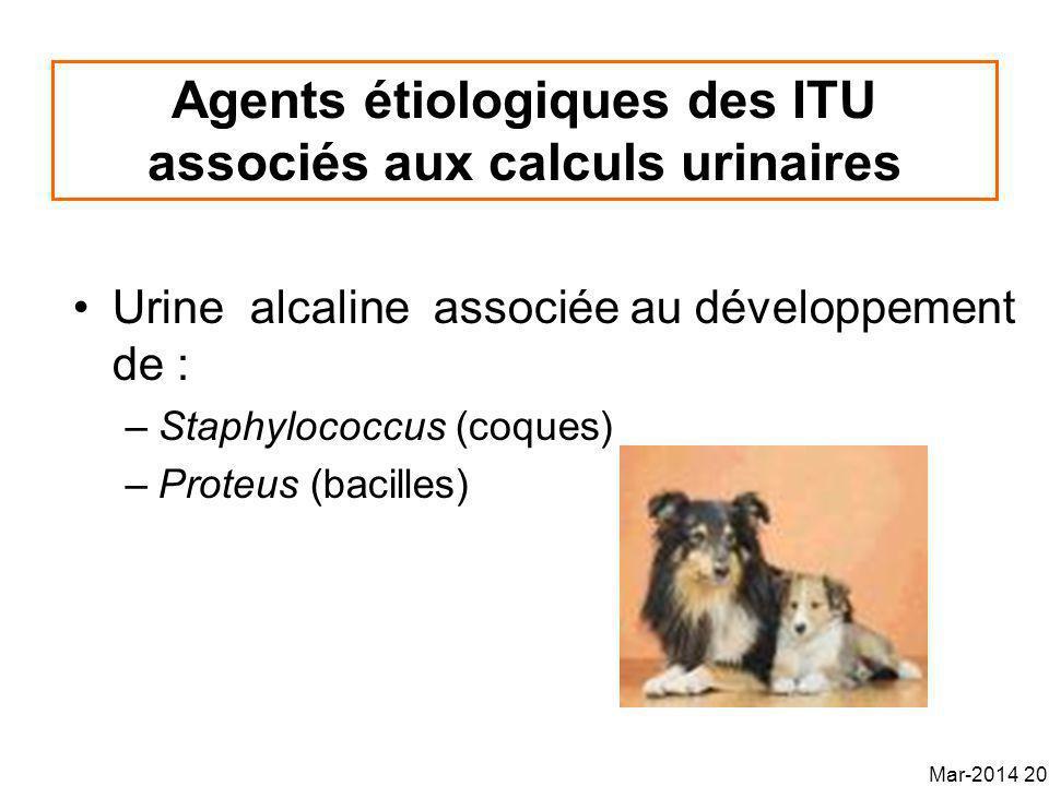 Agents étiologiques des ITU associés aux calculs urinaires Urine alcaline associée au développement de : –Staphylococcus (coques) –Proteus (bacilles) Mar-2014 20