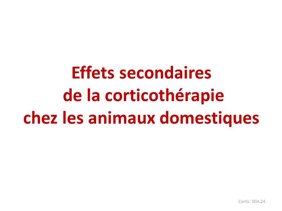 Cortic 00A.24 Effets secondaires de la corticothérapie chez les animaux domestiques