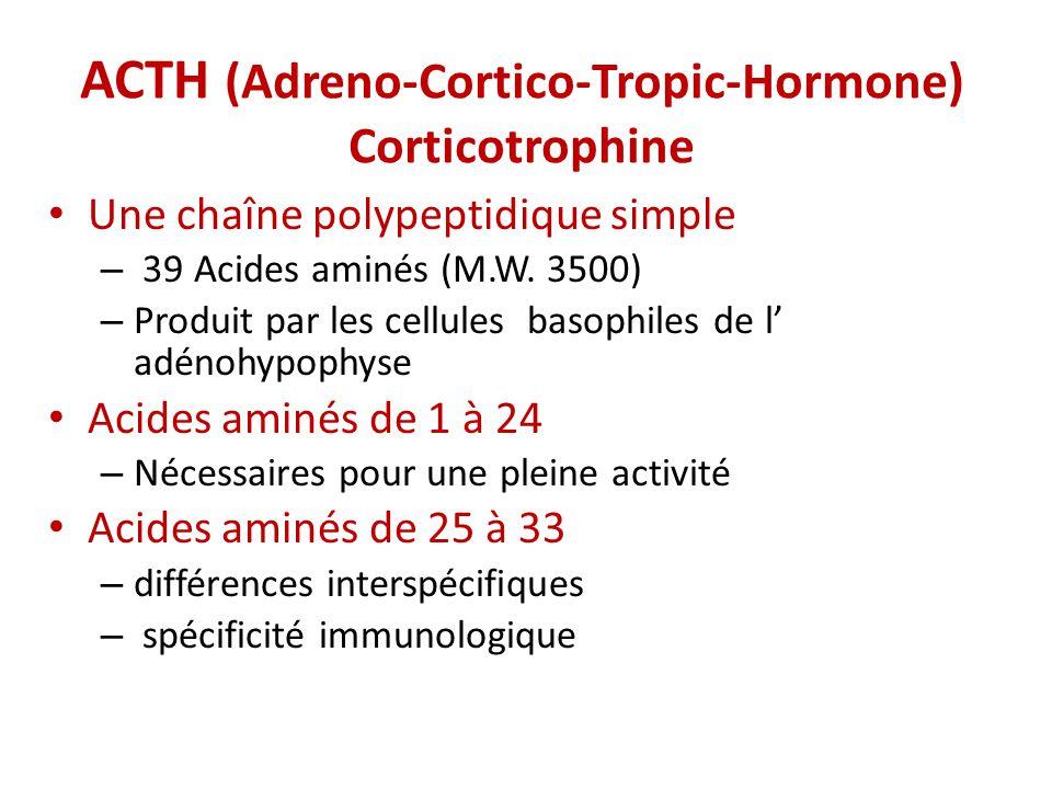 ACTH (Adreno-Cortico-Tropic-Hormone) Corticotrophine Une chaîne polypeptidique simple – 39 Acides aminés (M.W. 3500) – Produit par les cellules basoph