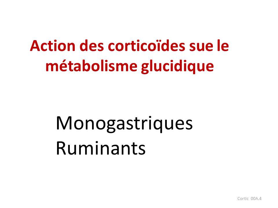 Cortic 00A.4 Action des corticoïdes sue le métabolisme glucidique Monogastriques Ruminants