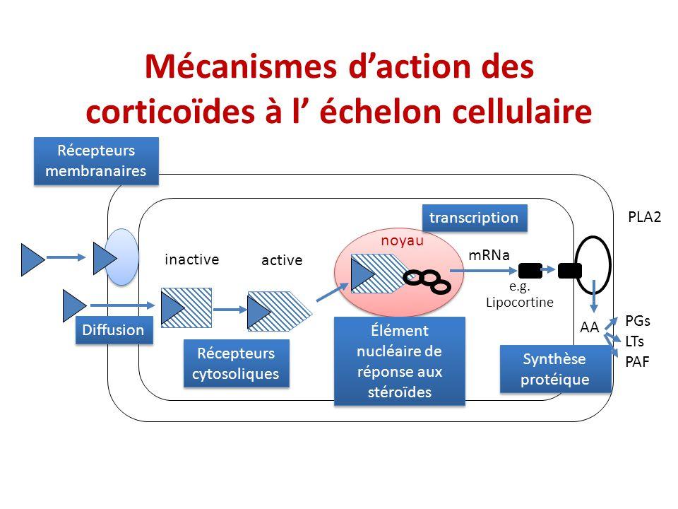 Mécanismes daction des corticoïdes à l échelon cellulaire Récepteurs membranaires Récepteurs cytosoliques Élément nucléaire de réponse aux stéroïdes S