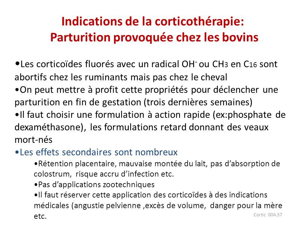 Cortic 00A.57 Les corticoïdes fluorés avec un radical OH - ou CH 3 en C 16 sont abortifs chez les ruminants mais pas chez le cheval On peut mettre à p