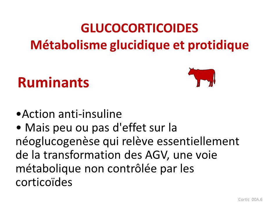 Cortic 00A.6 Action anti-insuline Mais peu ou pas d'effet sur la néoglucogenèse qui relève essentiellement de la transformation des AGV, une voie méta