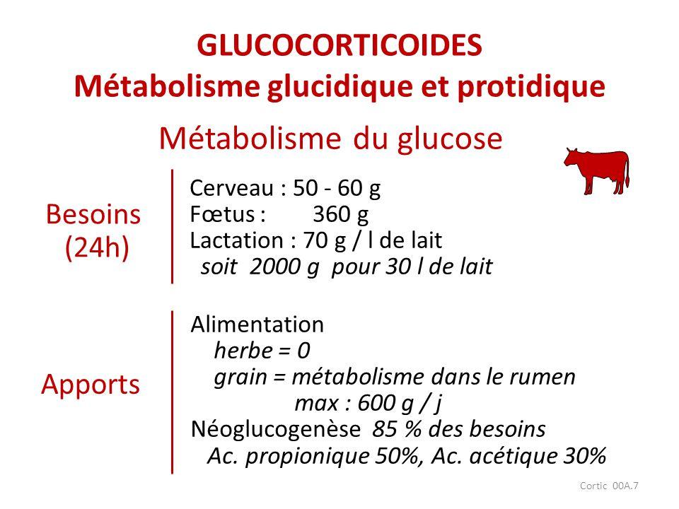 Cortic 00A.7 Besoins (24h) Métabolisme du glucose Cerveau : 50 - 60 g Fœtus : 360 g Lactation : 70 g / l de lait soit 2000 g pour 30 l de lait Apports