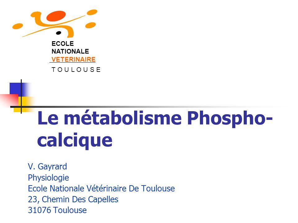 Le métabolisme Phospho- calcique V. Gayrard Physiologie Ecole Nationale Vétérinaire De Toulouse 23, Chemin Des Capelles 31076 Toulouse ECOLE NATIONALE