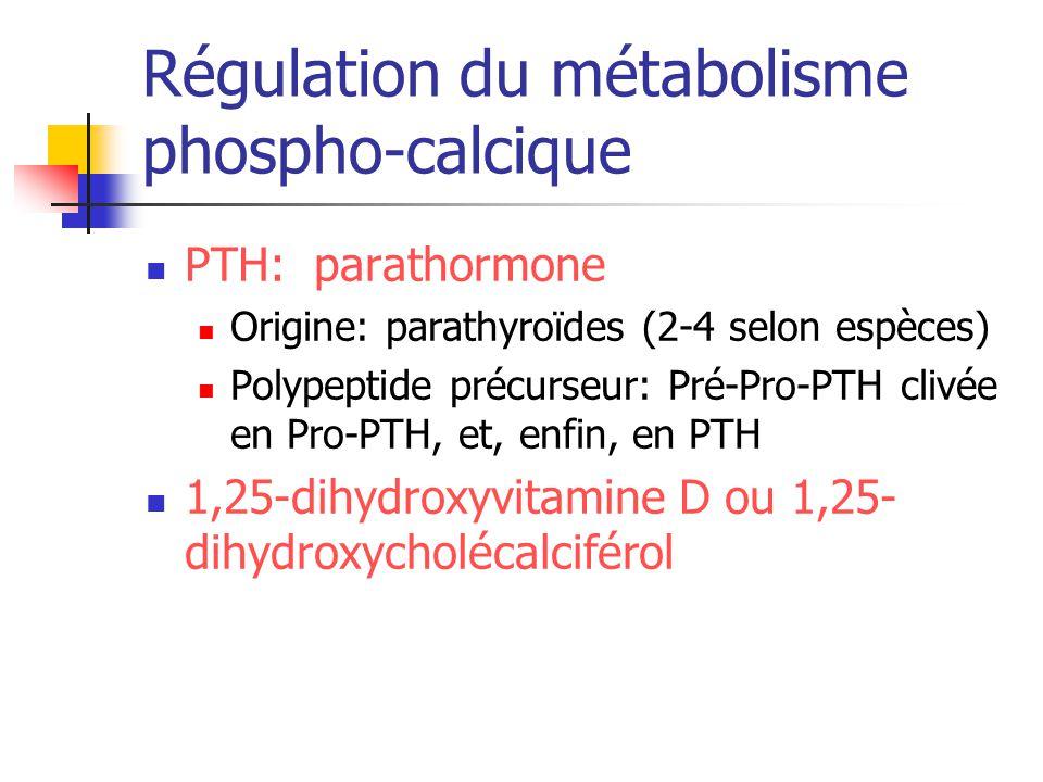 PTH: parathormone Origine: parathyroïdes (2-4 selon espèces) Polypeptide précurseur: Pré-Pro-PTH clivée en Pro-PTH, et, enfin, en PTH 1,25-dihydroxyvi