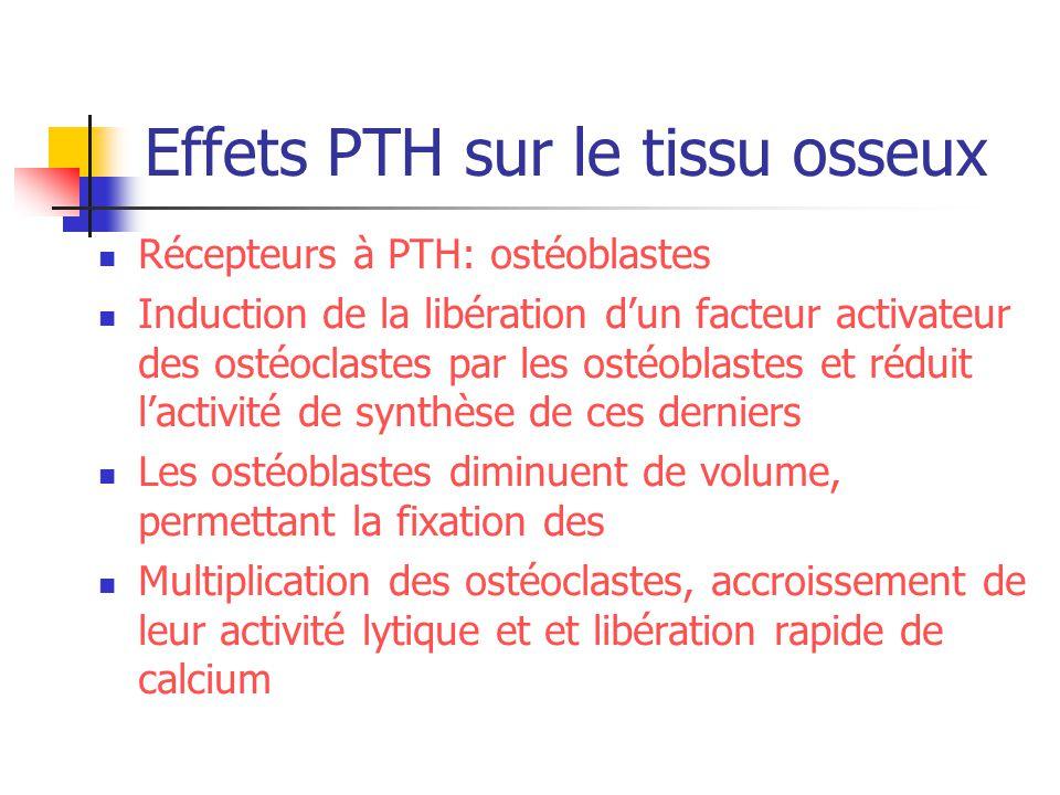 Effets PTH sur le tissu osseux Récepteurs à PTH: ostéoblastes Induction de la libération dun facteur activateur des ostéoclastes par les ostéoblastes