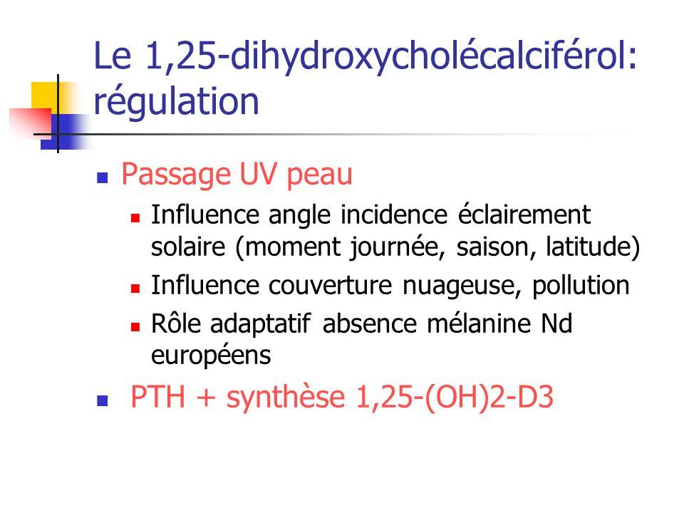 Le 1,25-dihydroxycholécalciférol: régulation Passage UV peau Influence angle incidence éclairement solaire (moment journée, saison, latitude) Influenc