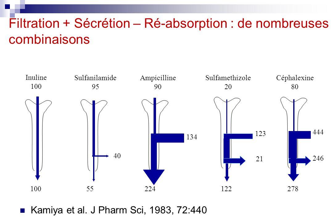 Filtration + Sécrétion – Ré-absorption : de nombreuses combinaisons Kamiya et al. J Pharm Sci, 1983, 72:440 Inuline 100 Sulfanilamide 95 Ampicilline 9