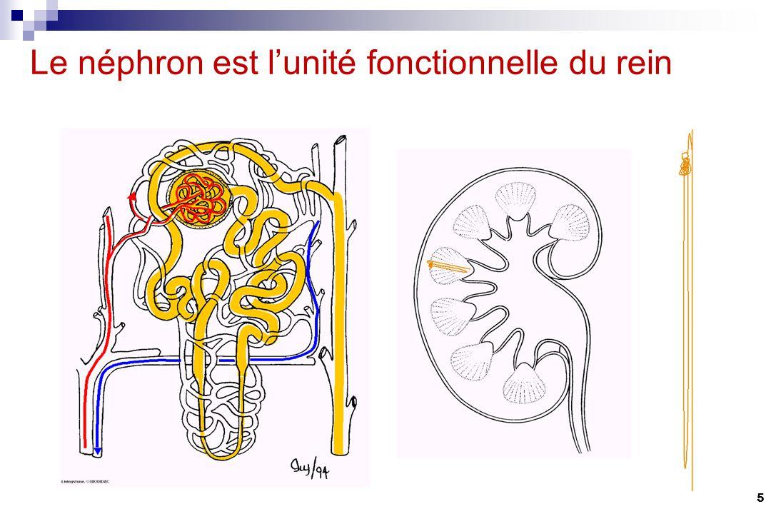 Filtration Secretion (active) Reabsorption (passive) Anse de Henle Glomerule Tubule proximal Tubule distal Tubule collecteur La clairance rénale Mécanismes physiologiques