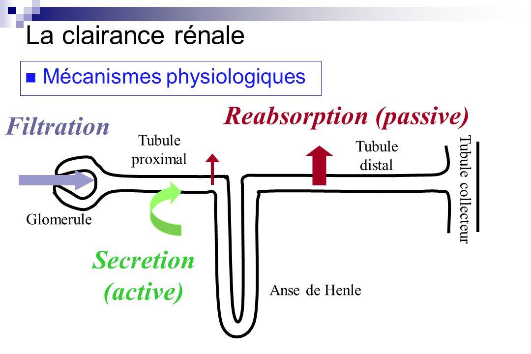 V excrétion rénale = V filtration + V sécrétion - V réabsorption V excrétion rénale C V filtration C = C V sécrétion - V réabsorption + Cl R = Cl filtration + Cl sécrétion - Cl réabsorption La clairance rénale Mécanismes physiologiques