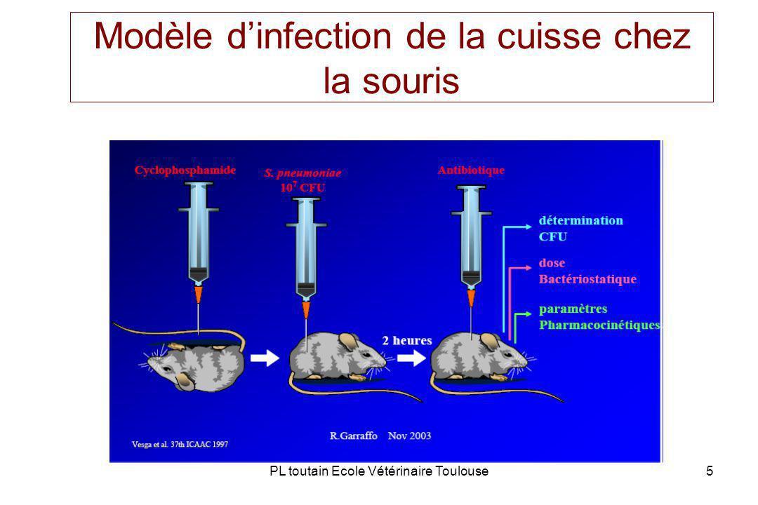 PL toutain Ecole Vétérinaire Toulouse5 Modèle dinfection de la cuisse chez la souris