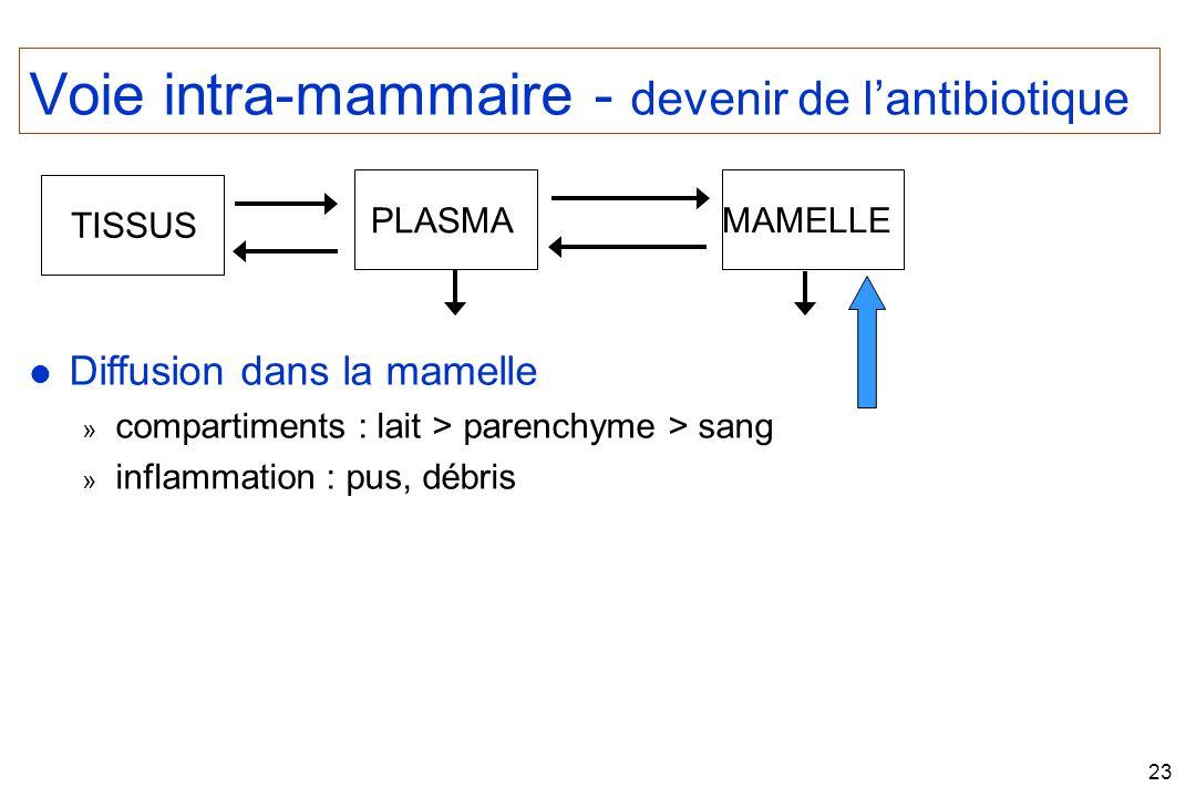 23 Voie intra-mammaire - devenir de lantibiotique l Diffusion dans la mamelle » compartiments : lait > parenchyme > sang » inflammation : pus, débris MAMELLE PLASMA TISSUS