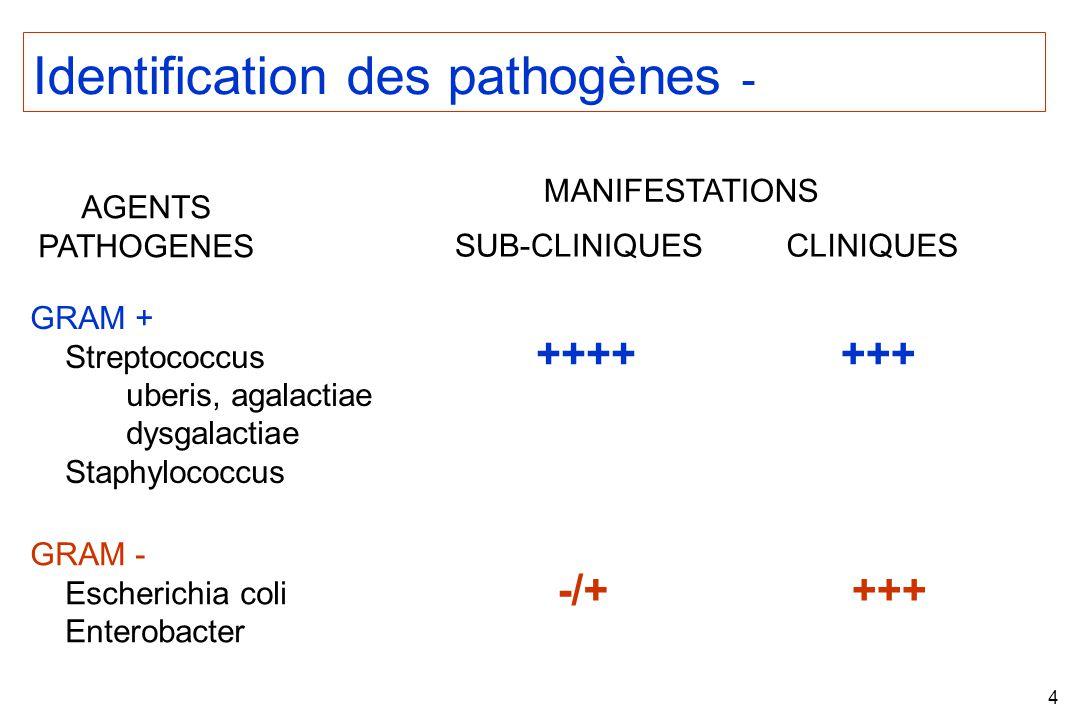 4 Identification des pathogènes - AGENTS PATHOGENES GRAM - Escherichia coli Enterobacter GRAM + Streptococcus uberis, agalactiae dysgalactiae Staphylococcus MANIFESTATIONS SUB-CLINIQUESCLINIQUES +++++++ -/++++