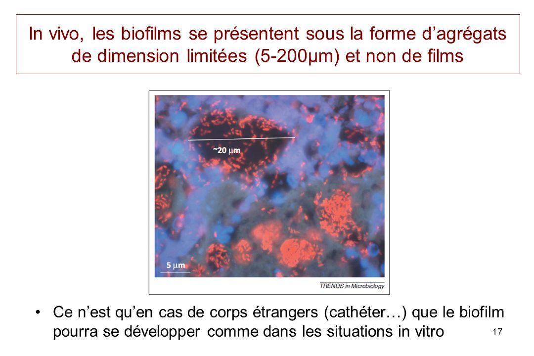 In vivo, les biofilms se présentent sous la forme dagrégats de dimension limitées (5-200µm) et non de films Ce nest quen cas de corps étrangers (cathéter…) que le biofilm pourra se développer comme dans les situations in vitro 17