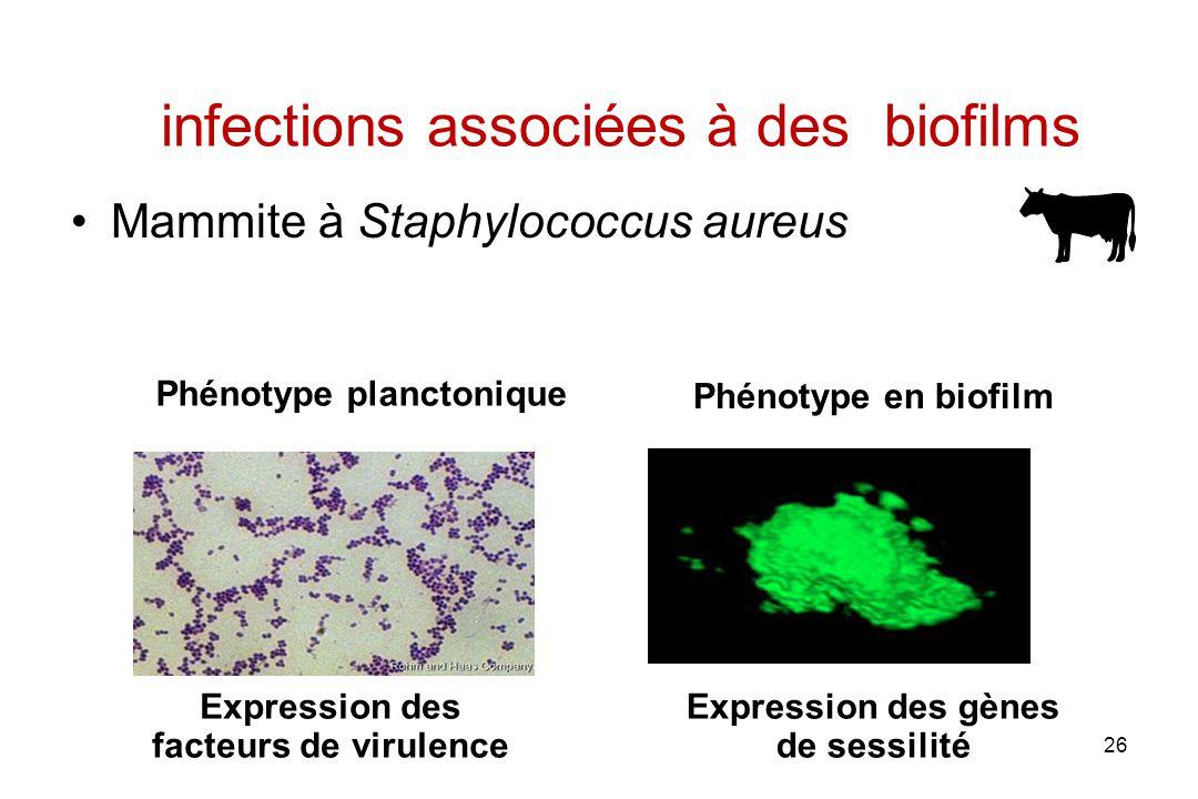 26 infections associées à des biofilms Mammite à Staphylococcus aureus Phénotype planctonique Phénotype en biofilm Expression des facteurs de virulence Expression des gènes de sessilité