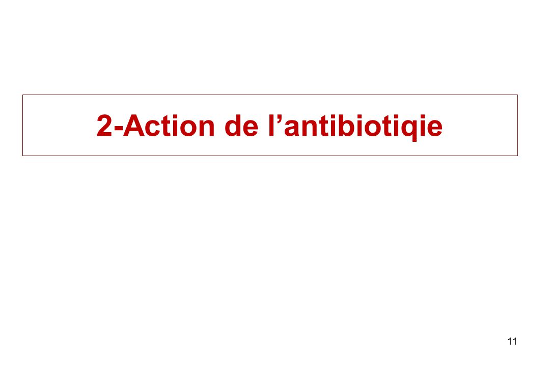 2-Action de lantibiotiqie 11