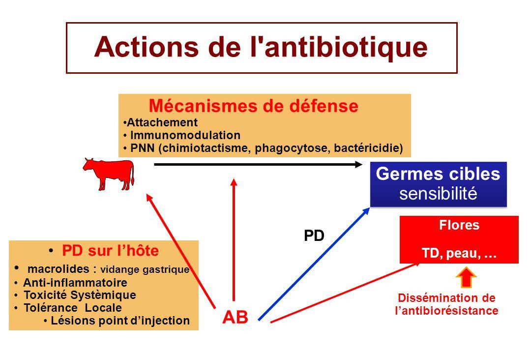 Actions de l'antibiotique Germes cibles sensibilité Germes cibles sensibilité AB PD sur lhôte macrolides : vidange gastrique Anti-inflammatoire Toxici