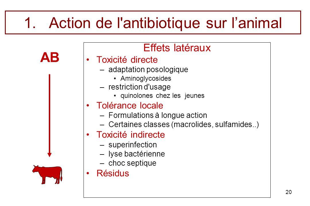 20 1.Action de l'antibiotique sur lanimal Effets latéraux Toxicité directe –adaptation posologique Aminoglycosides –restriction d'usage quinolones che