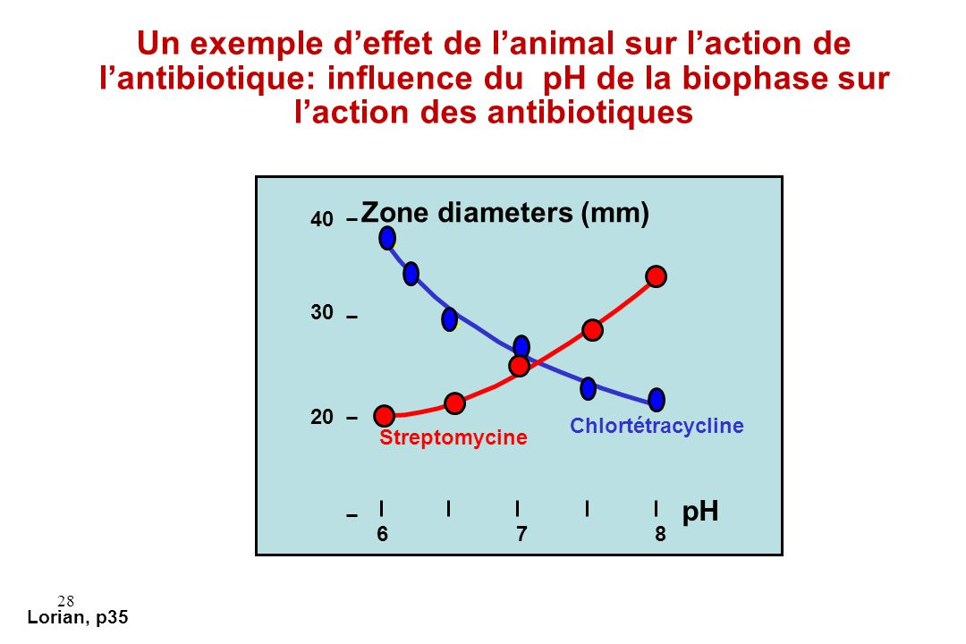 28 Lorian, p35 Un exemple deffet de lanimal sur laction de lantibiotique: influence du pH de la biophase sur laction des antibiotiques x x x x x 40 30