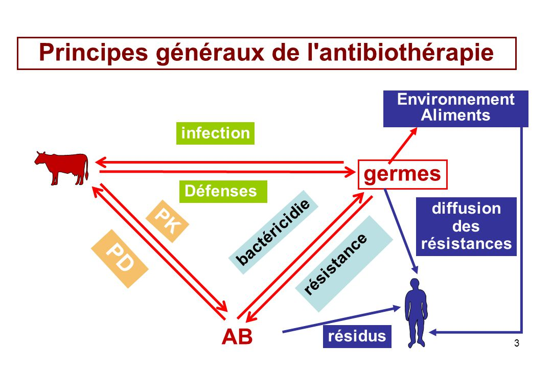 3 infection Défenses PK bactéricidie résistance PD AB germes résidus diffusion des résistances Principes généraux de l'antibiothérapie Environnement A
