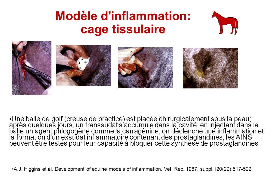Modèle d'inflammation: cage tissulaire A.J. Higgins et al. Development of equine models of inflammation. Vet. Rec. 1987, suppl.120(22) 517-522 Une bal
