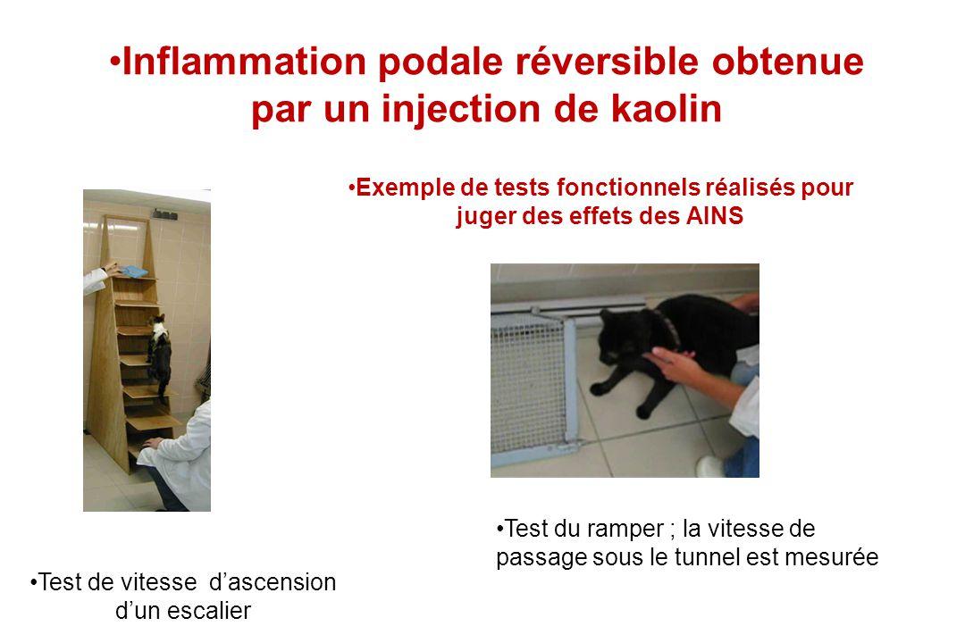 Inflammation podale réversible obtenue par un injection de kaolin Exemple de tests fonctionnels réalisés pour juger des effets des AINS Test de vitess