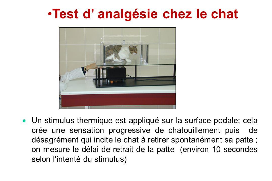 Un stimulus thermique est appliqué sur la surface podale; cela crée une sensation progressive de chatouillement puis de désagrément qui incite le chat
