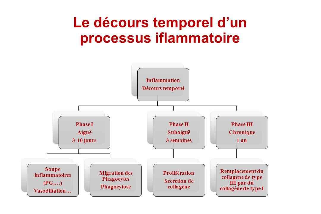 Le décours temporel dun processus iflammatoire